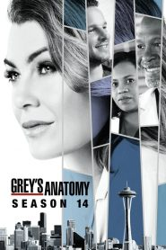 Grey's Anatomy: 14 Temporada